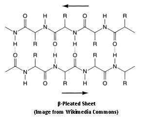 Structure of beta pleated sheet