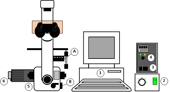Layout of the fluorescence miscroscope