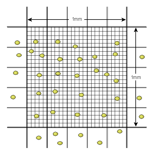Close up of the grid on a haemocytometer
