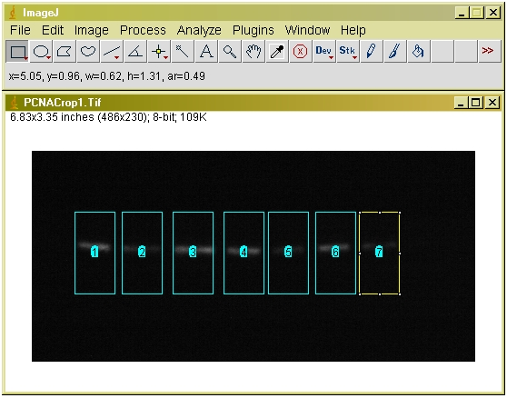Using ImageJ Figure 4