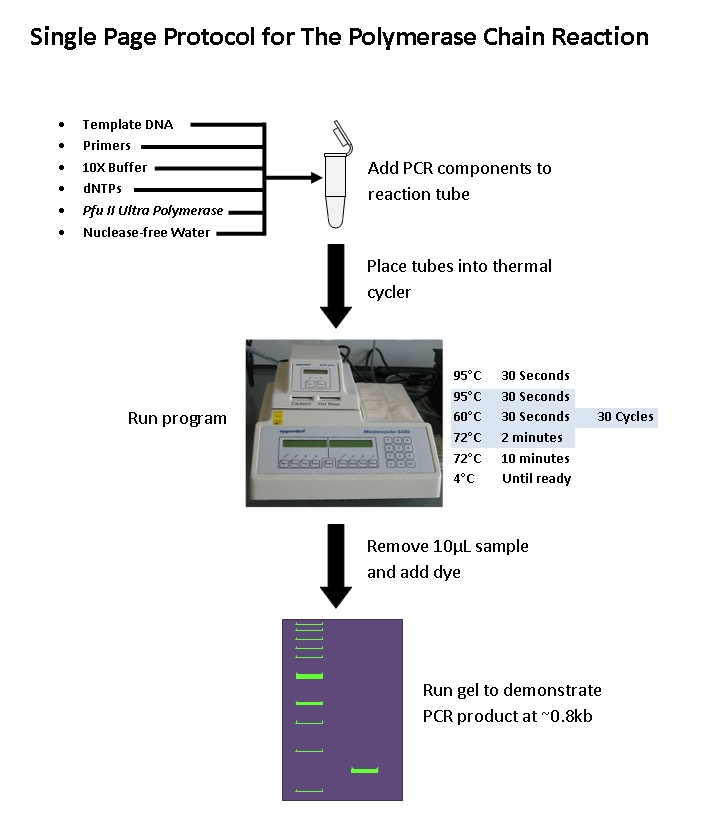 Polymerase chain reaction: diagnostic application ppt download.