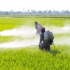 Australian research helps reduce Sri Lankan pesticide deaths